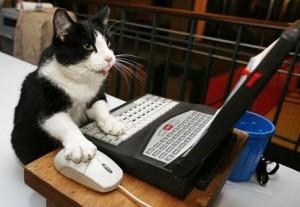 Pastebin Cat
