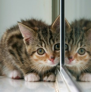 Mirrored kitten